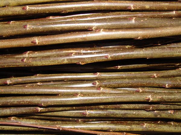 Black Maul – BM - Triandra- gruppen Lys til mørk brun. Den mest utbrette flettepilen i England. En stor pil som er bløt og smidig å flette med. Velegnet som kontrastfarge i kurver og fletting av levende hegn og levegger i hagen.
