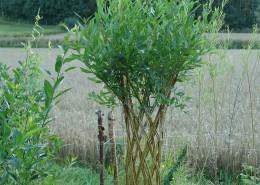 Belgisk tre skovstuen pil levende pil