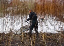 Høsting av pil, harwest willow