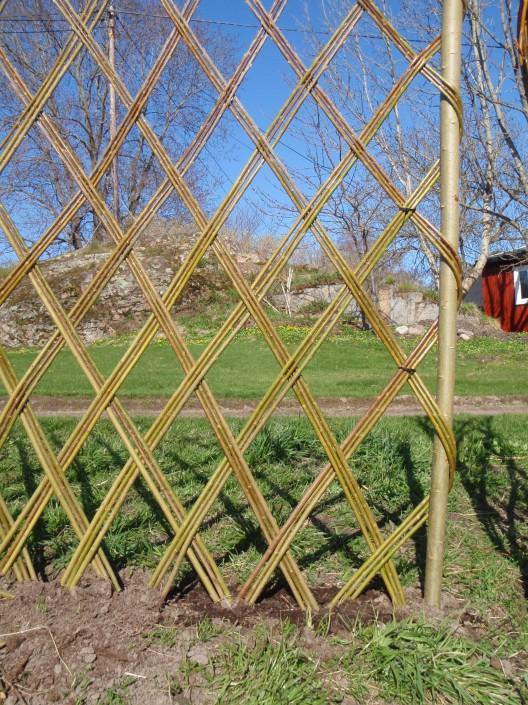 Nyplantte belgisk gjerde - belgisk hegn - tripple flett
