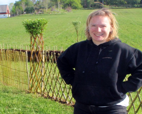 levende pil belgisk hegn, pil i hagen