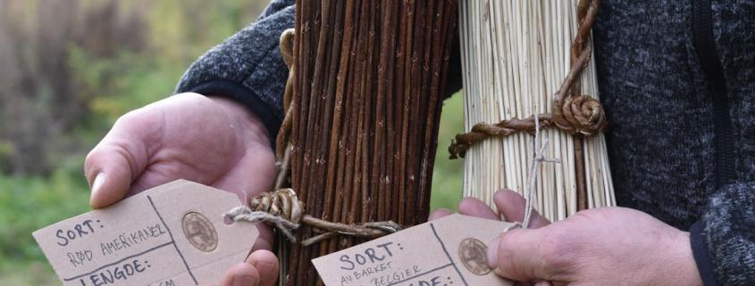 kurvmaker, kurvmakerlærling, pilefletting, pilfletting, kurvmakerskolen, kurvfletting, silja levin, lars levin, skovstuen pil, kurver, levende pil, basket making, basketmaker, willoweaver, willow